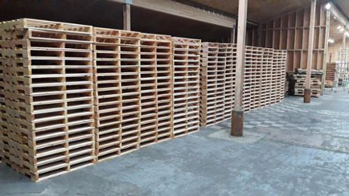 Pallets staged in the pallet factory warehouse